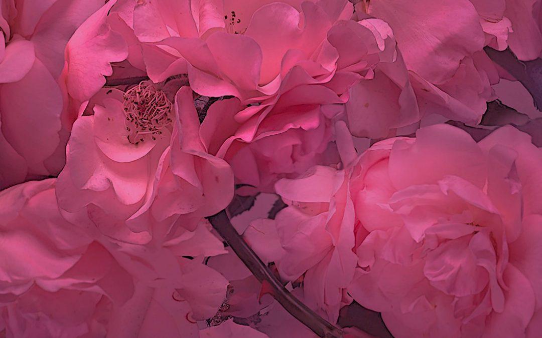 In principio fu il rosa.